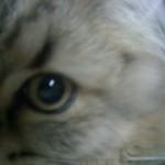 きれいな目だね~!