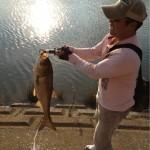 wikiで調べたらすごく珍しい魚らしいです!!