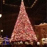 クリスマスの時期はこのツリーの辺りで演奏してたんですよね~。